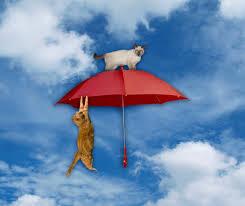 Favourite Umbrella Companies